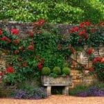 Китни и нестандартни идеи за градина