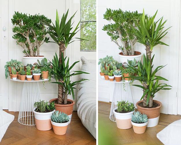 Стайни растения върху маса