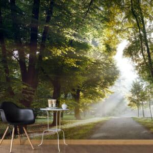Голям фототапет с алея в парка, огряна от слънце