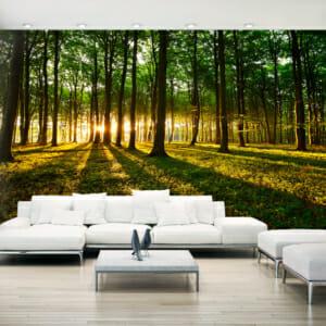 Голям фототапет за цяла стена Утро в гората