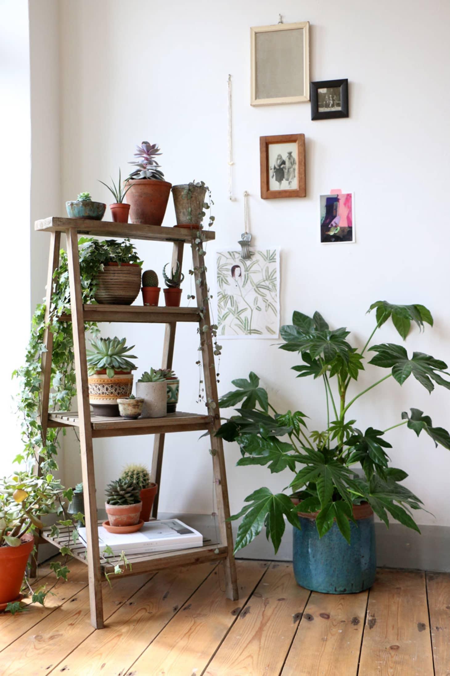 Стара стълба като поставка за цветя