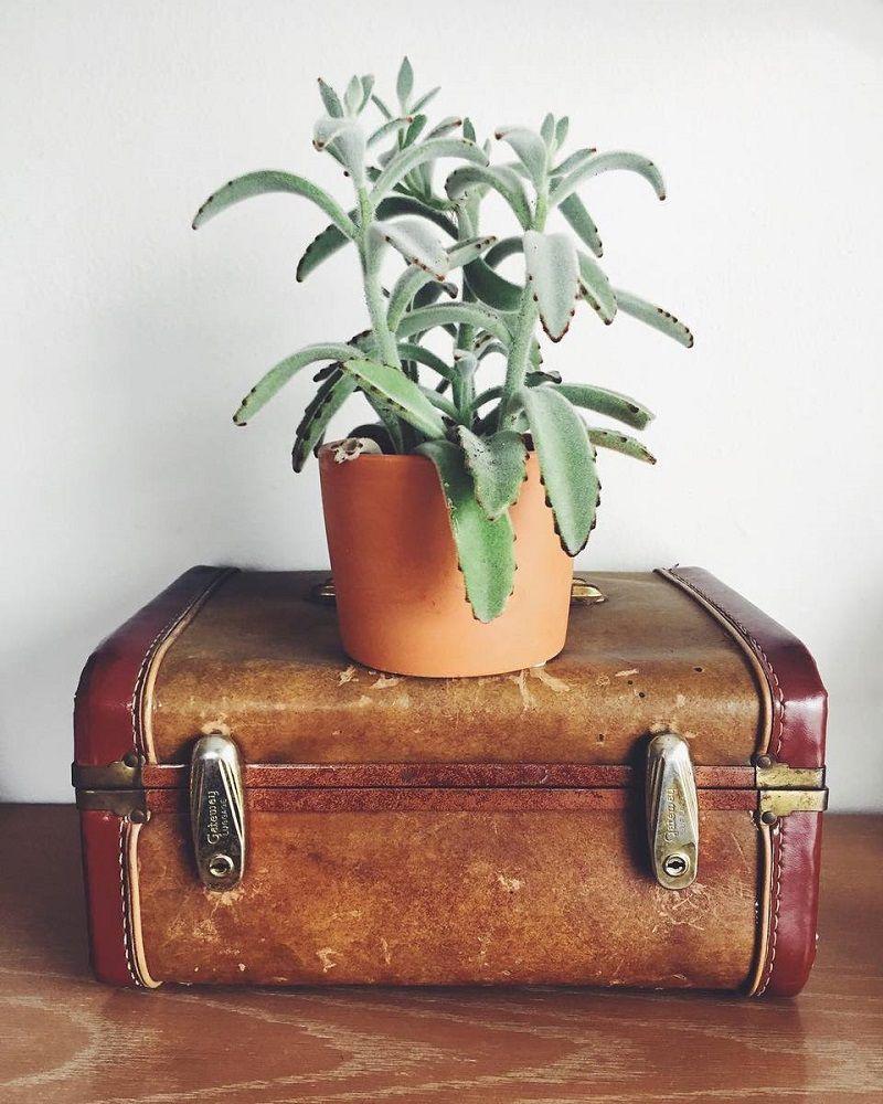 Стар куфар превърнат в цветарник