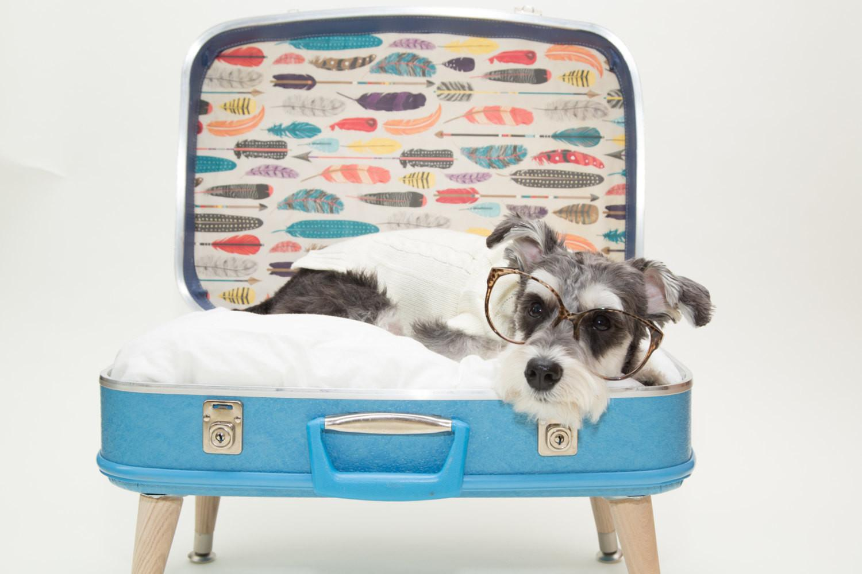 Стар куфар превърнат в легло за куче